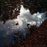 Ententanz auf den Schwanensee